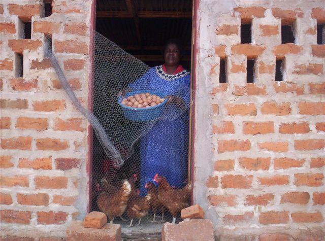 Kippen en eieren, goede voeding en goede handel